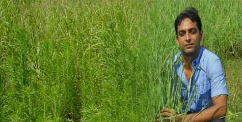 mba, bihari, bihar youth, educated biharis, patna, development in bihar, mba boys farming, ibtl