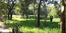 ploughing field, farming, indian farming, indigenious, hoshangabad bhopal madhya pradesh, baba mayaram, raju